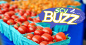SCV Buzz-Family Fun